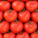 Pomidory - przetwory
